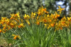 Daffodils вольный перевод на русский язык