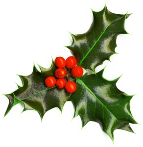Christmas Attribute. Holly