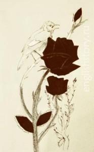 Книги на английском языке для начинающих. The Nightingale and the Rose