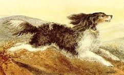 Флосси. Собака Шарлотты Бронте